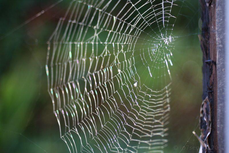 Spiders web Image