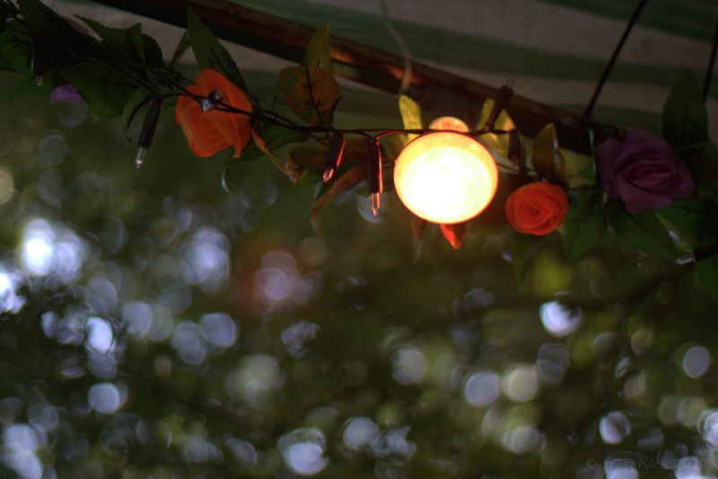 Lamp & Leaves Image
